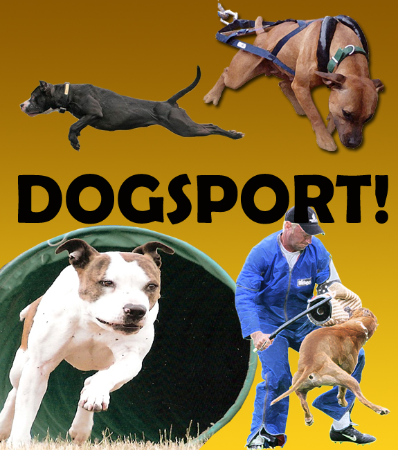 dogsport, dog sport, pit bull, weight pull, weight pulling, schutzhund, ring sport, obedience, UKC, AKC, tracking, dock diving, splash dogs, frisbee, flyball, rally, nosework, agility